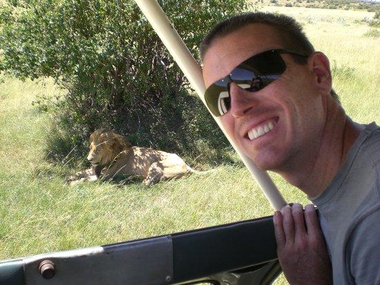 Wildlife Kenya Safaris - Day Trips: Getting close to a lion