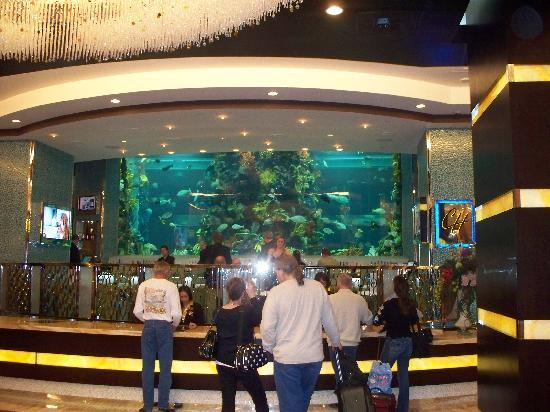 Golden Nugget Hotel & Casino: Chart House 70,000 gallon fish tank