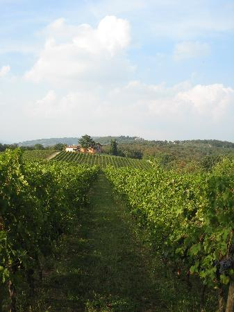Musella Winery & Country Relais: Tour in the wine yards