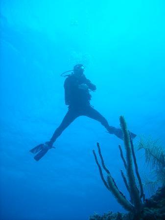 Belizean Shores Resort: The Aquarium