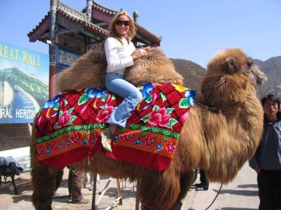 Travel Great Wall: A CAMELLO EN LA GRAN MURALLA CHINA