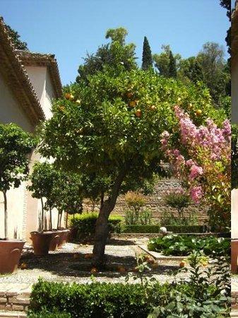 Alhambra: Granada