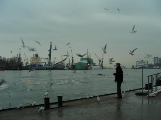 Bilde fra Port of Hamburg