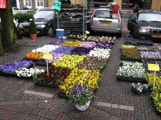 Utrecht, Nederland: Flower market