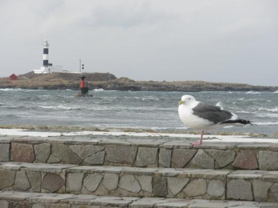 Oma-machi, Japan: Lazy seagull, probably trying to stay warm...