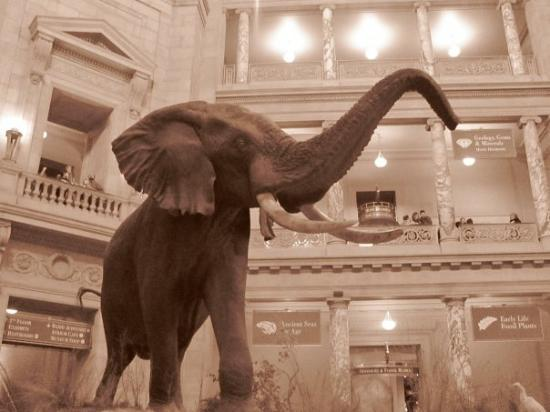 Smithsoniansk nasjonalmuseum for naturhistorie: National Museum of Natural History