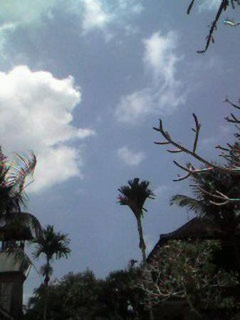 Ubud, Indonesia: Bali, Indonesia, 2006