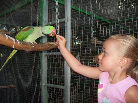 Ashmore Palms Holiday Village: bird feeding in the mornings