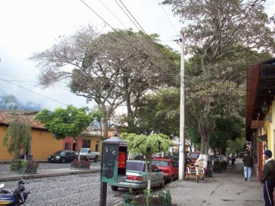 Antigua, Guatemala: the street with huge trees alongside it