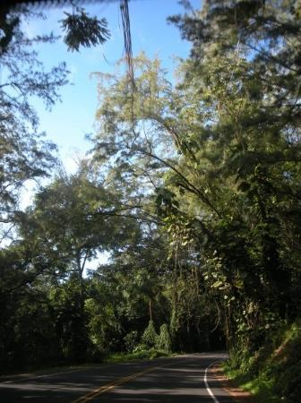 Bilde fra Hilo