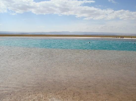 San Pedro de Atacama, Chile: Laguna Cejar