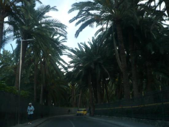 Gran Canaria, Spania: El Oasis