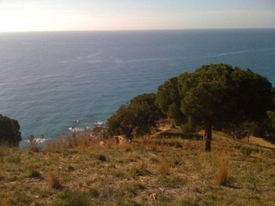Calella, Spania: Pins i la mar Mediterrania! Que més es pot demanar?