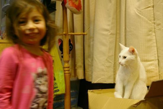 Akihabara: Lara fick besöka ett katt-café. Egentligen en illa-luktande pytteliten lägenhet med massor av ka