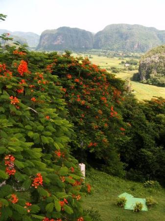 Vinales, Cuba: Viñales, Cuba, 2006