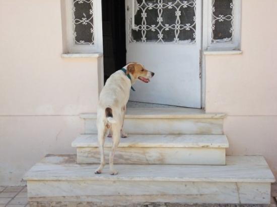 Kefallinia, Hellas: En grekisk hund på vift