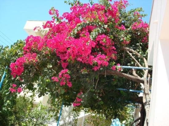 Kefallinia, Hellas: Varför växer inte såna hemma :(