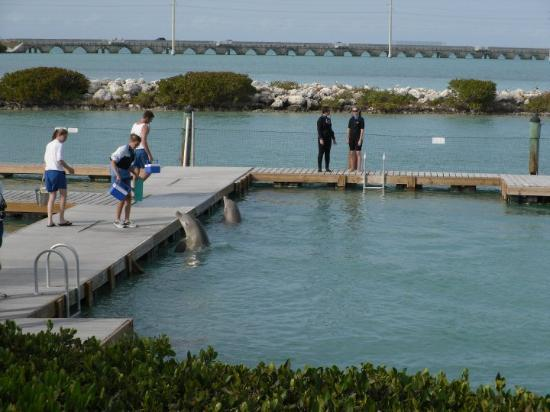Duck Key, Hawks Cay