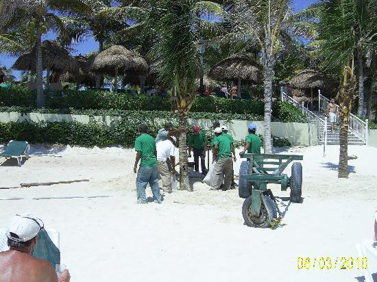 Hotel Riu Tequila: Hard working local planting Palm trees on the beach
