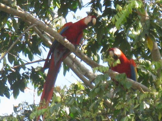 Crocodile Bay Resort - An All-Inclusive Resort: Macaws outside our room.