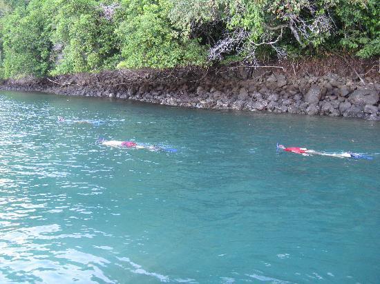 Crocodile Bay Resort: Snorkeling