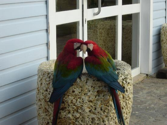 Excellence Punta Cana: Macaws that hung out on the grounds