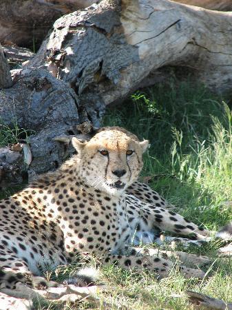 Porini Mara Camp: The most graceful animal on earth!