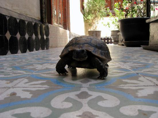 Riad Dar Najat: Speedy...The Ninja Turtle!