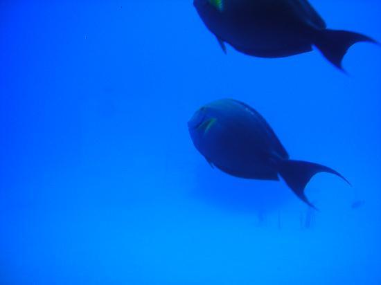 Atlantis Submarines Kona: Pretty!
