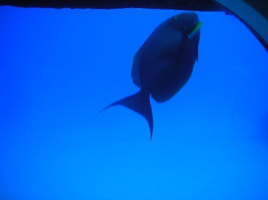 Atlantis Submarines Kona: They come right up to the sub