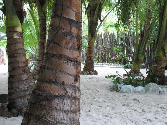 Playa Mambo: Coconut Trees Outside Cabanas