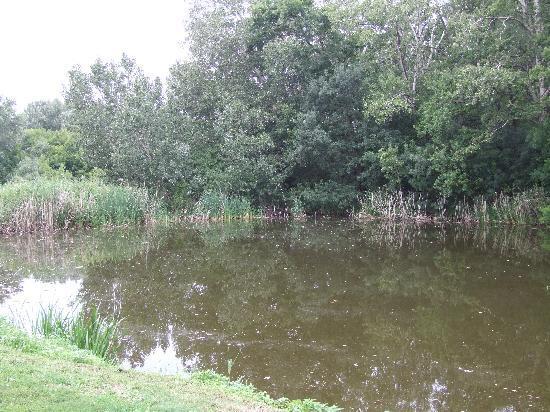 Mizse Motel: beautiful lake