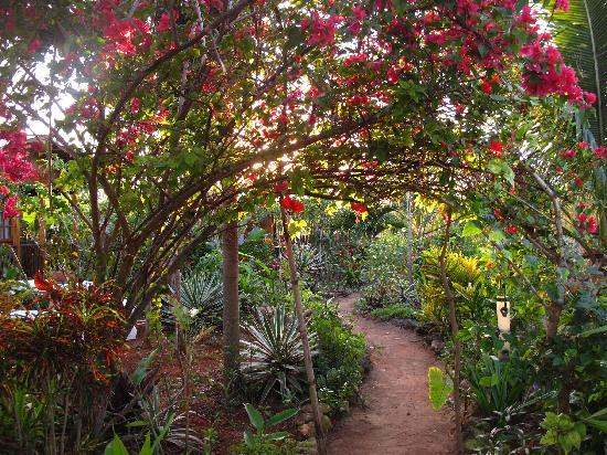 Judy House Cottages and Rooms: another incredible view of the garden