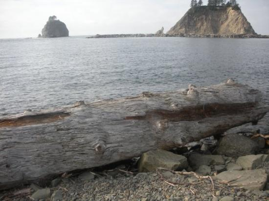La Push, WA: I sat on this log and played mbira for about 3 hours.  I counted the rings and this tree was 106