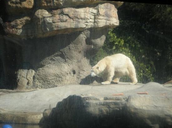 Bilde fra San Diego Zoo