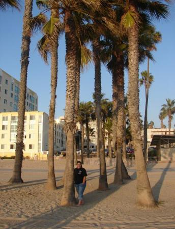Santa Monica, CA: Me with the Palm trees