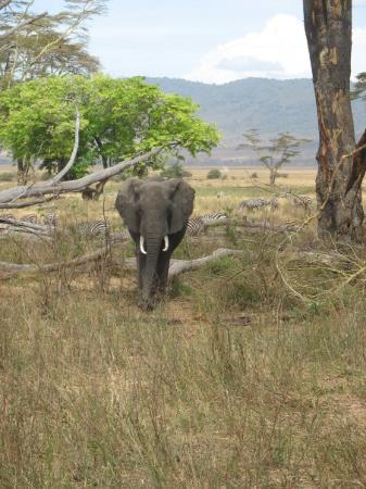 Bilde fra Ngorongoro Conservation Area