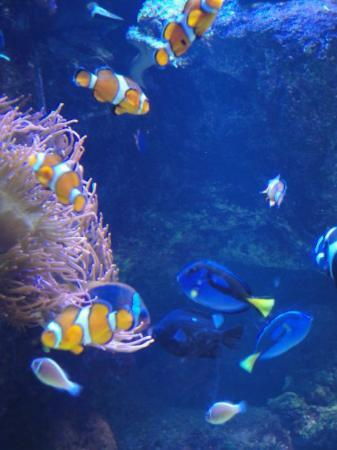 Long Beach, CA: I found Nemo!