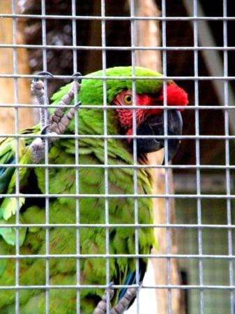 Frank Buck Zoo - Picture of Gainesville, Texas - TripAdvisor
