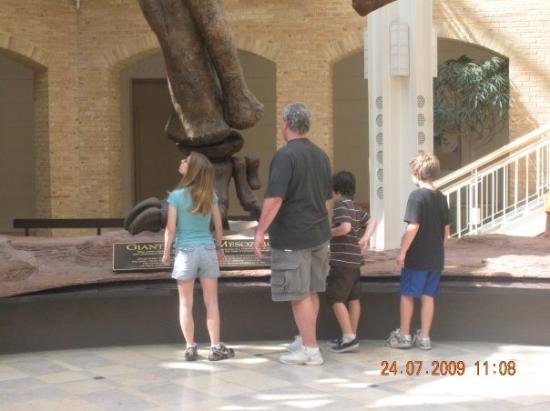 Fernbank Museum of Natural History: Atlanta Natural History Museum..foot of a dinosaur