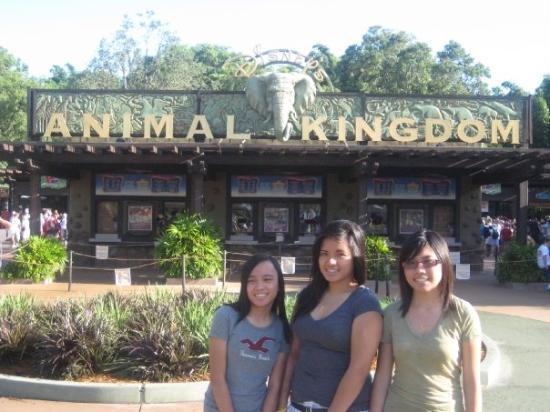 Disney's Animal Kingdom: Animal Kingdom.