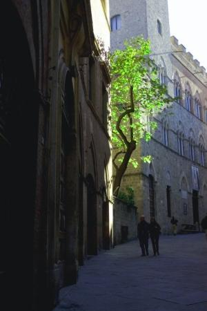 Bilde fra Siena