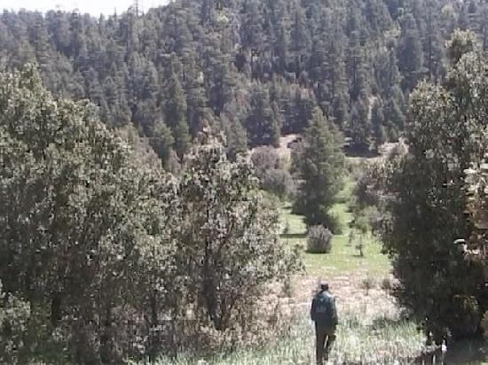 Azrou, Marokko: Cedar Forest Trekking