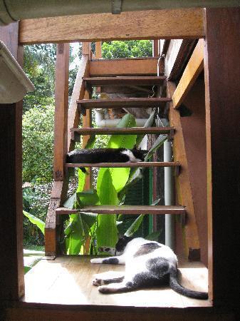 Pousada Cachoeira: gotta love the cats!