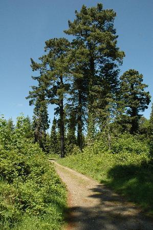 Avondale House & Forest Park: Avondale Forest