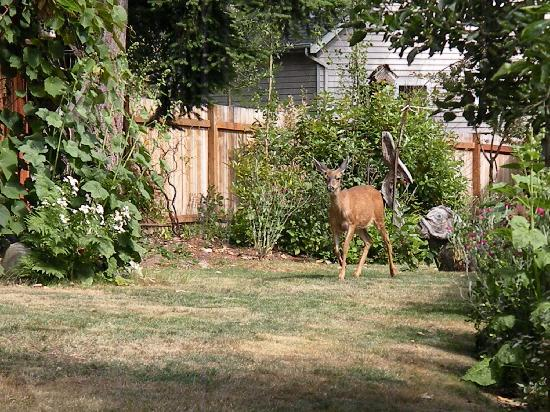 A Tuscan Lady: a deer in the garden!