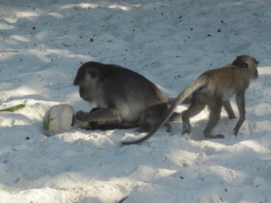 Ko Phi Phi Don, Thailand: monkey beach, ko phi phi