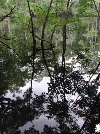 Chiefland, FL: Suwannee River Reflections