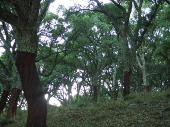 Jimena de la Frontera, Spain: Parque de los Alcornocales