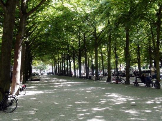 Bilde fra Haag